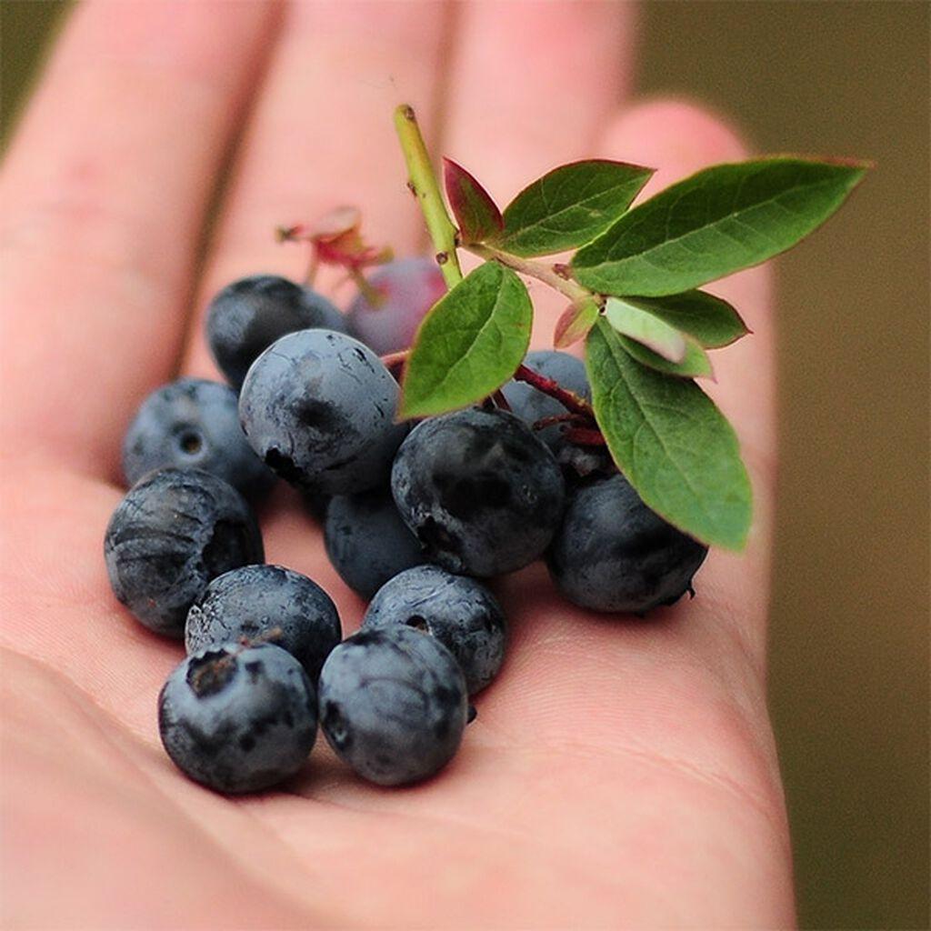Vitaminrike frukter og bær du kan dyrke selv