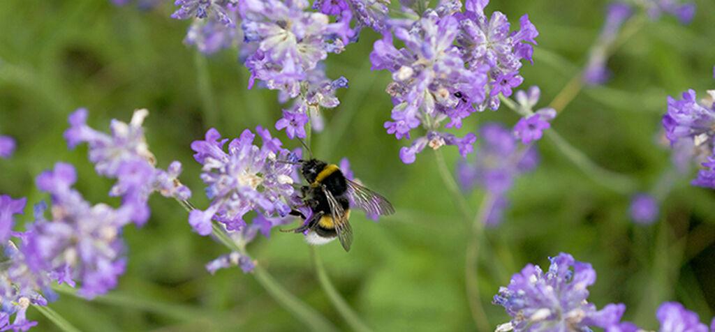 Pollineringsskolen