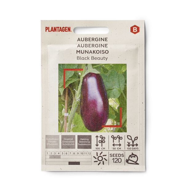 Aubergine 'Black Beauty'