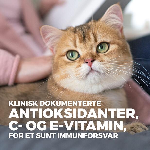 Hill´s SP Sensitive Stomach & Skin Adult Kattefôr med Kylling, 1.5 kg