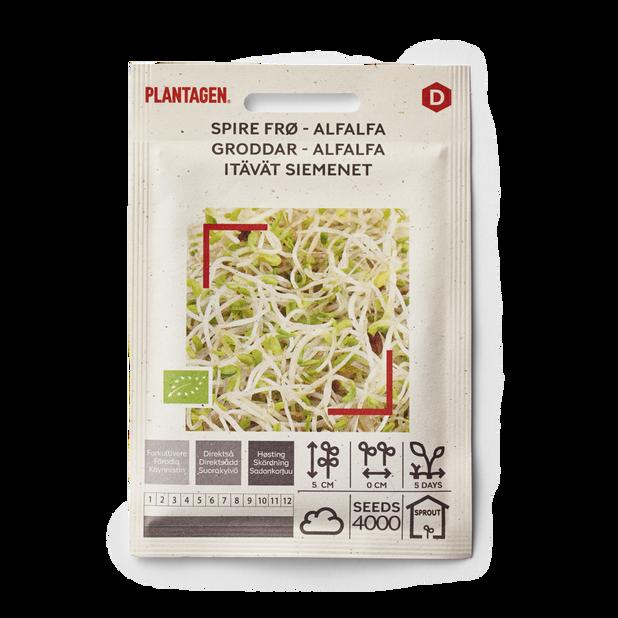 Spire frø Alfalfa
