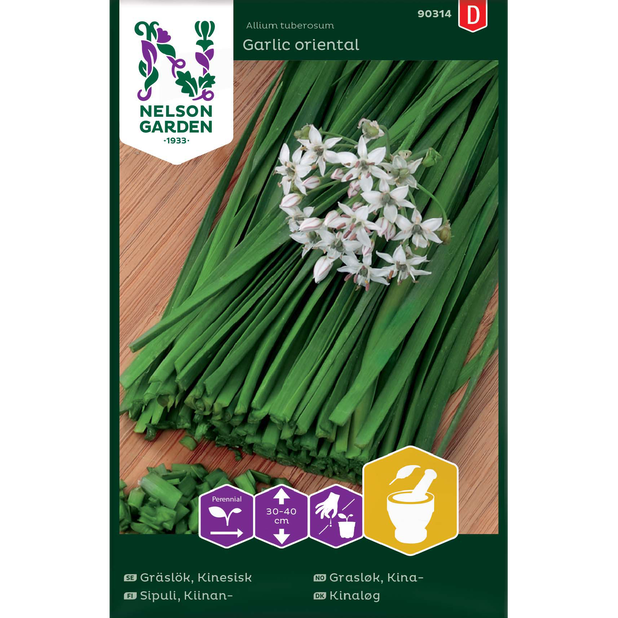 Kina grasløk 'Garlic oriental', Flerfarget