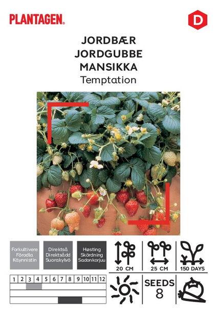 Jordbær 'Temptation'