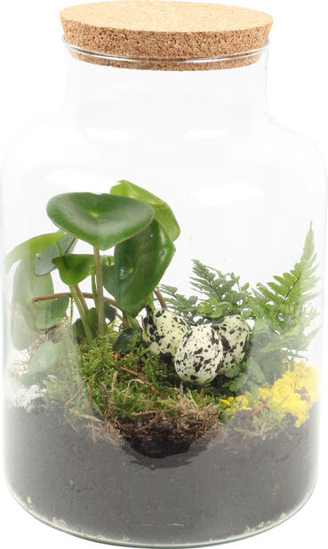 Terrarium Aisha, Høyde 30 cm, Grønn