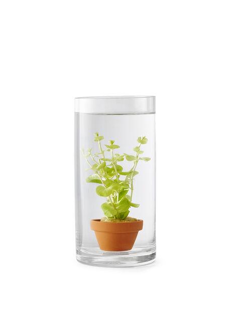 Vannplante Ludwigia 9 cm