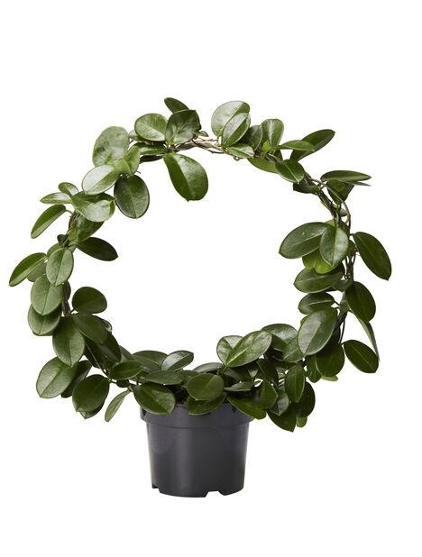 Porselensplante på bøyle, Høyde 65 cm, Grønn
