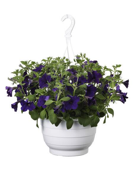 Petunia i ampel, Ø25 cm, Blå