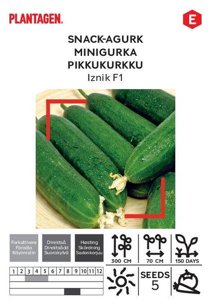 Snack-agurk 'Iznik F1'