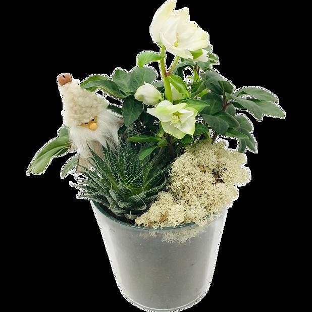 Plantearrangement Frans