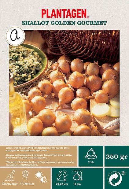 Sjalottløk 'Golden Gourmet', Beige