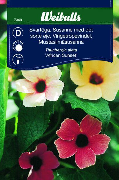 Vingetropevindel 'African Sunset'