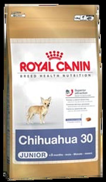 Chihuahua Junior 1,5kg
