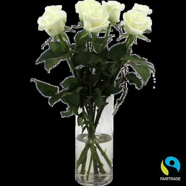 Roser , Høyde 50 cm, Hvit