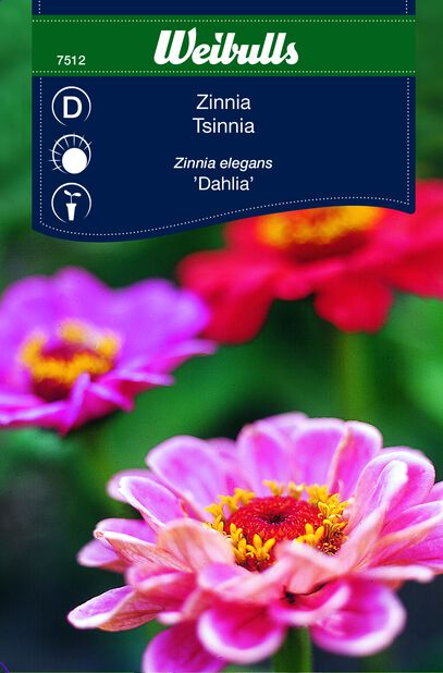 Sinnia 'Dahlia'