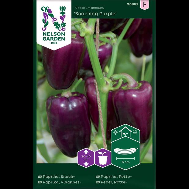 Pottepaprika 'Snacking Purple', Flerfarget