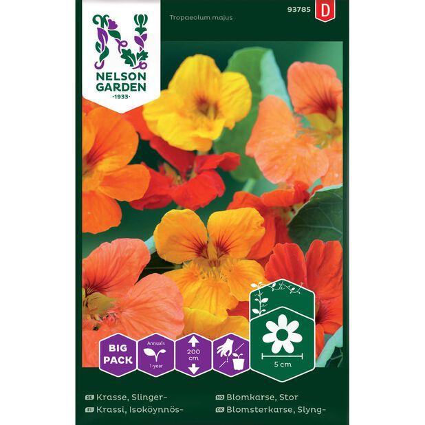 Stor Blomkarse , Flerfarget