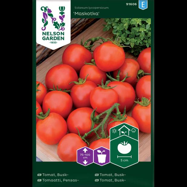 Vanlig tomat 'Maskotka' , Flerfarget
