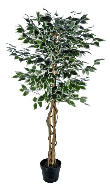 Bjørkefiken H140 cm, grønn, kunstig