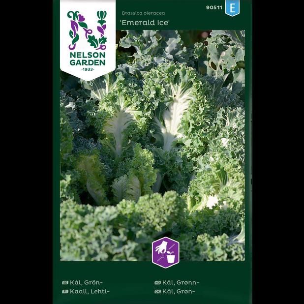 Grønnkål 'Emerald Ice', Flerfarget