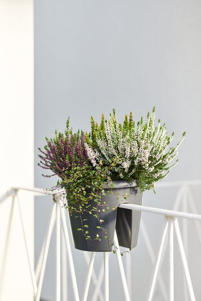 Høstmiks balkongpotte, Ø27 cm, Flerfarget