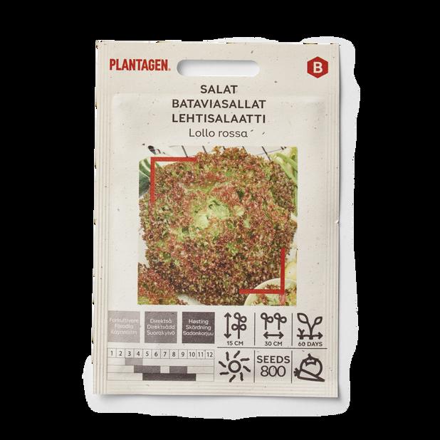 Salat 'Lollo rossa'