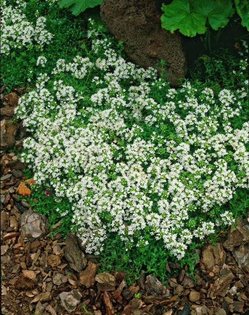 Kryptimian, Høyde 15 cm, Hvit