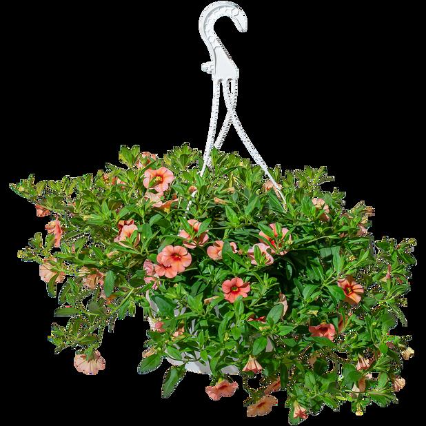 Petunia småblomstret, Ø25 cm, Oransje