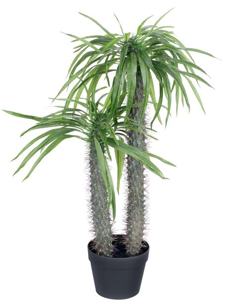 Madagaskarpalme kunstig , Høyde 79 cm, Grønn