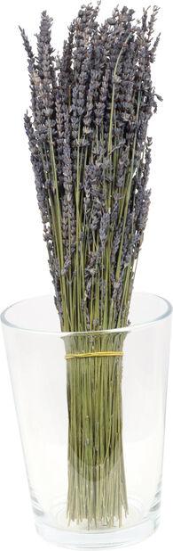 Lavendel , Høyde 50 cm, Blå