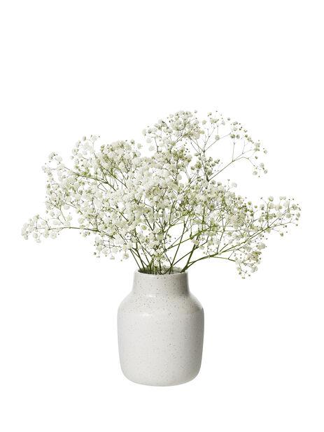 Gypsophila 3 pk white (an