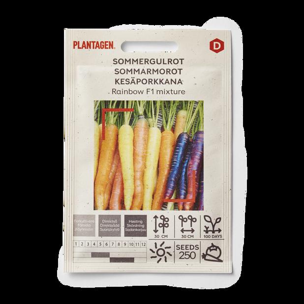 Sommergulrot 'Rainbow F1 mixture'