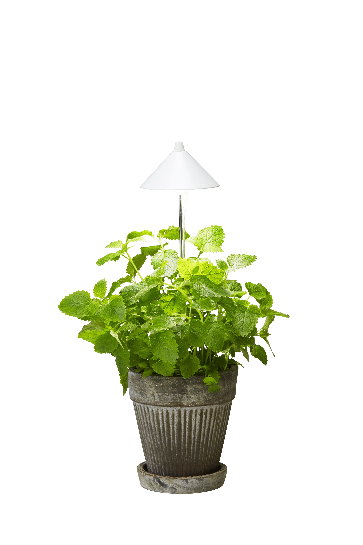 Plantelys gir frodighet året rundt | Plantasjen