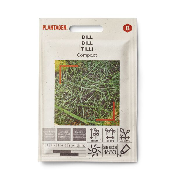 Dill 'Compact'