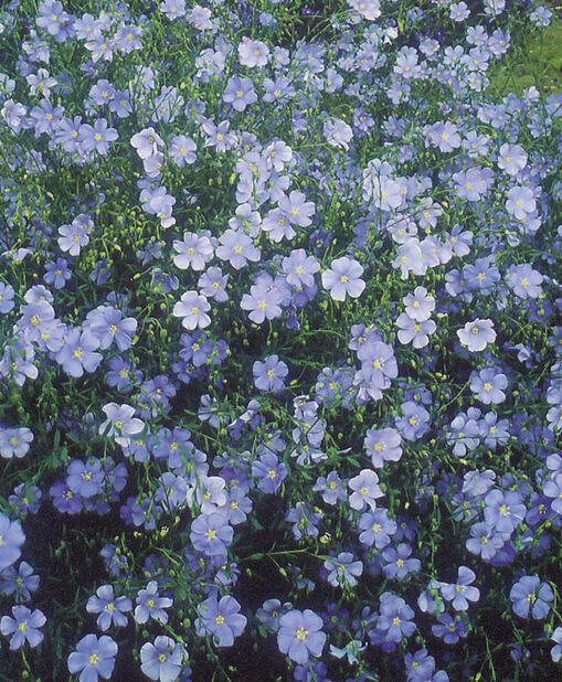 Berglin, Høyde 15 cm, Blå