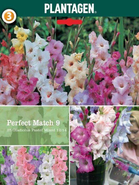 Gladiolus mix, Flerfarget