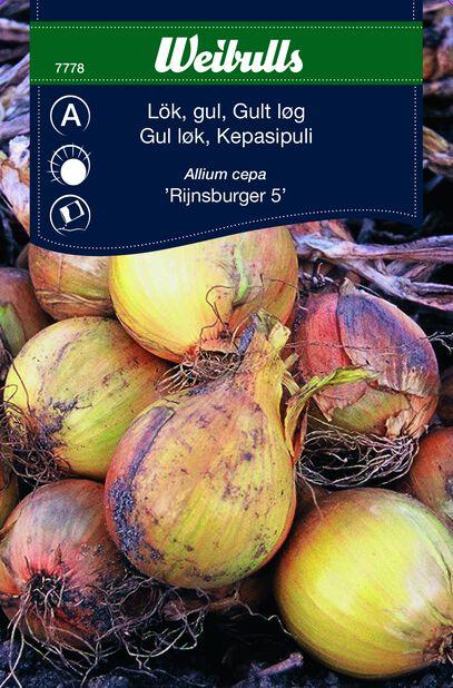Gul Løk Rijnsburger
