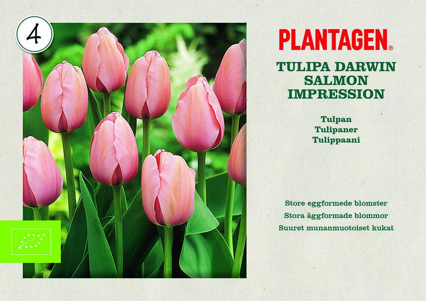 Tulipan 'Salmon Impression'
