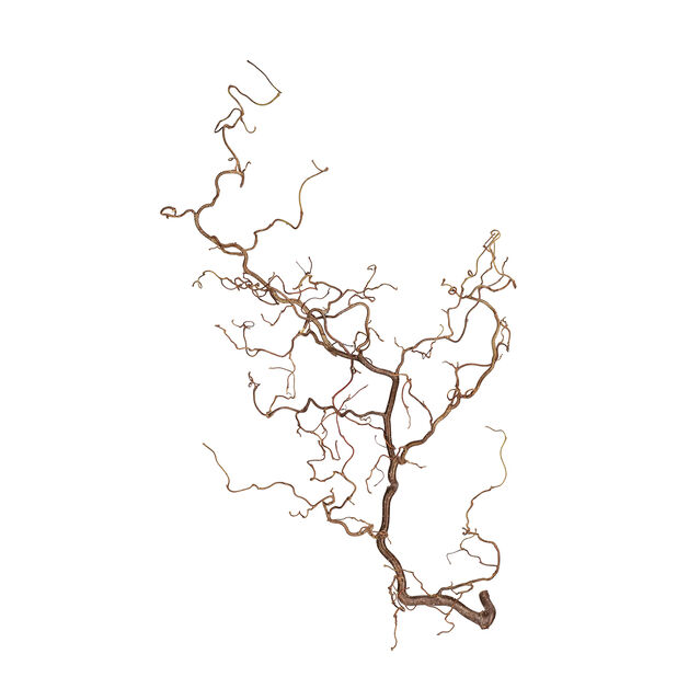 Vrihassel grener, Høyde 90 cm, Tre