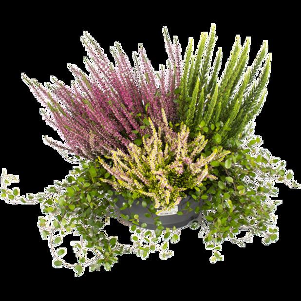 Høstlyng i skål, Ø27 cm, Flerfarget