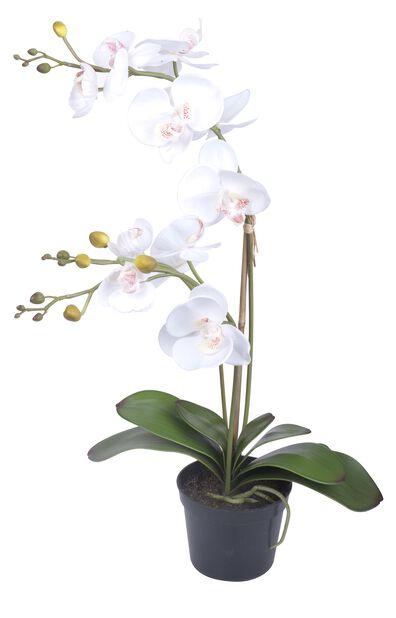 Orkidé kunstig, Høyde 65 cm, Hvit