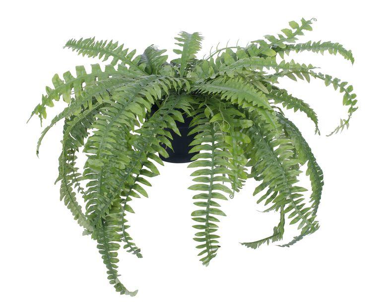 Bostonbregne kunstig , Høyde 31 cm, Grønn