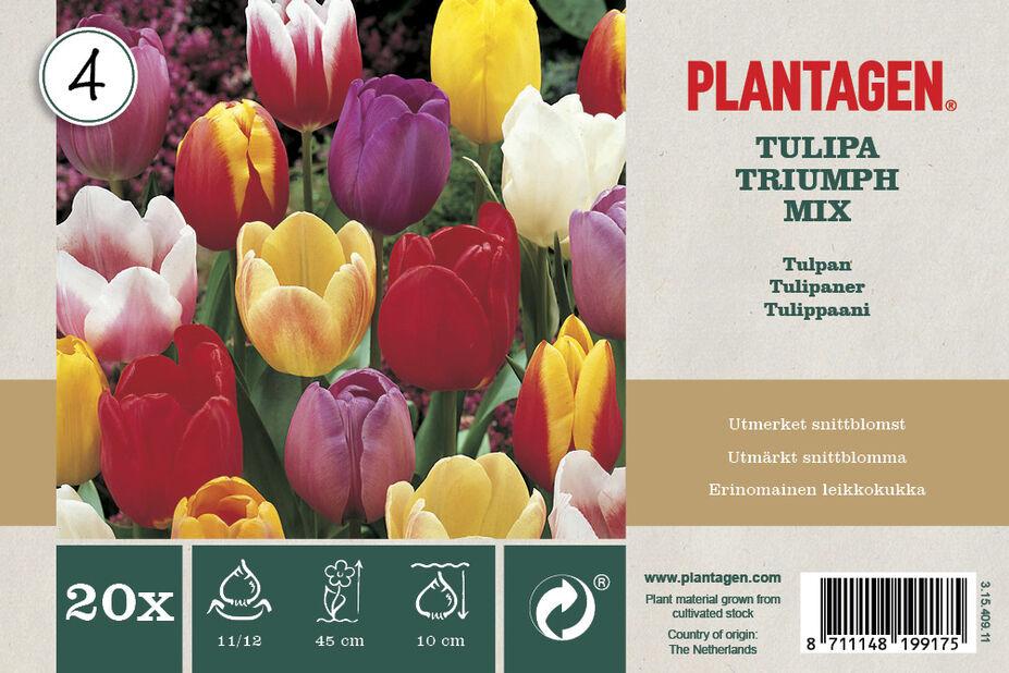 Triumph-tulipan, Flerfarget