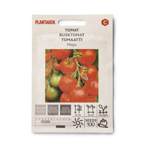 Tomat 'Maja'