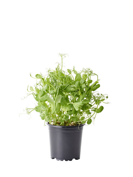 Spirer, Ø12 cm, Grønn