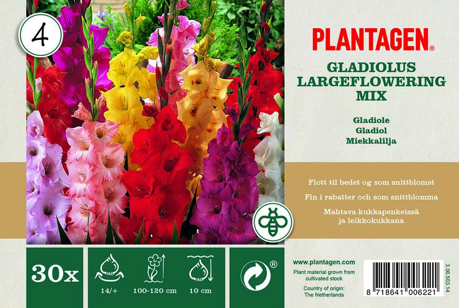 Storblomstrede gladioler miks, Flerfarget