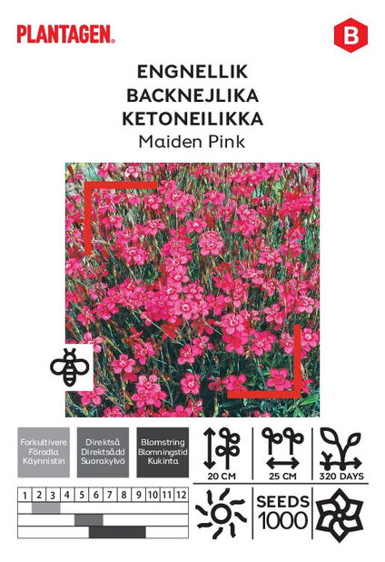 Engnellik 'Maiden Pink'