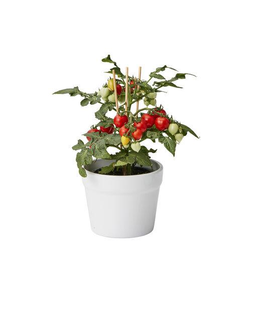 Cherrytomat, Ø10.5 cm, Rød