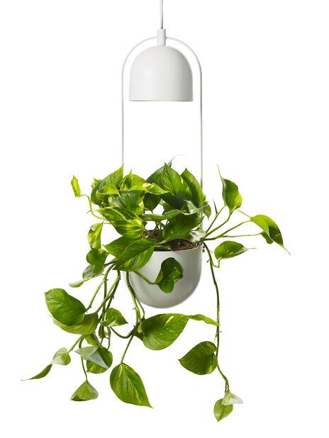 Plantebelysning Alora Ø18 cm