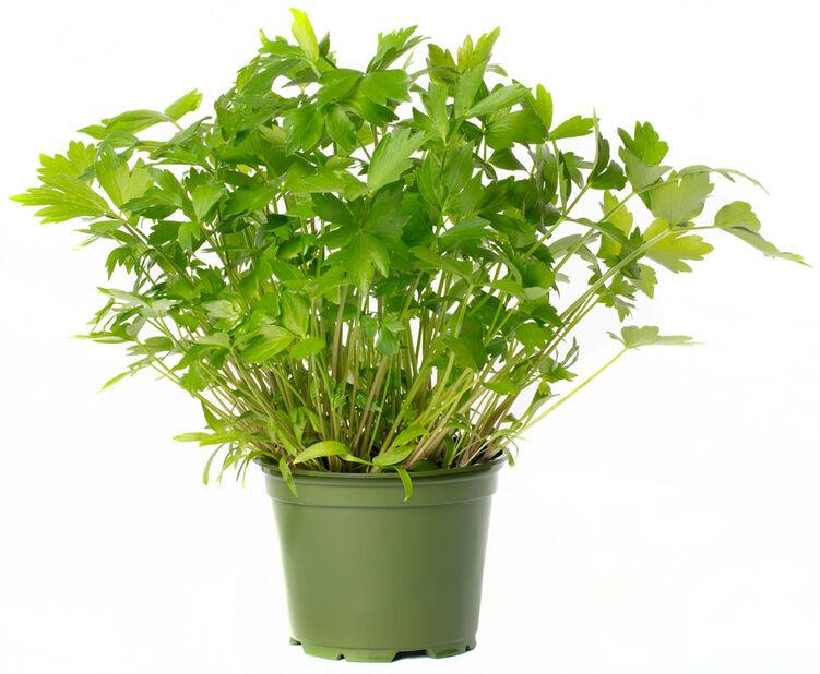 Løpstikke, Ø12 cm, Grønn