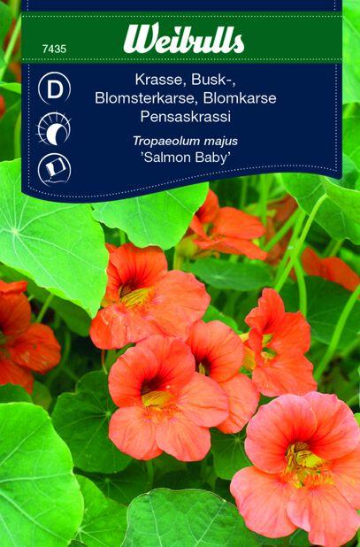 Blomkarse 'Salmon Baby'